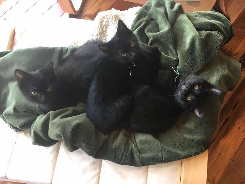 3 blackies