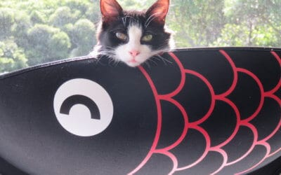 Cait Sith Announces the Opening Date of Neko Ngeru Cat Adoption Cafe
