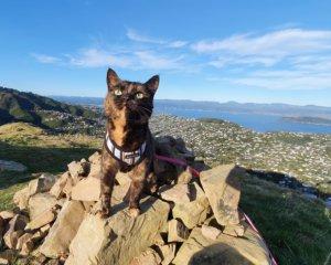 Adventure Cats @ Neko Ngeru Cat Adoption Cafe | Lower Hutt | Wellington | ニュージーランド