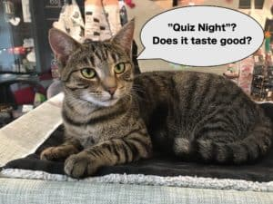 Cat Quiz Night @ Neko Ngeru Cat Adoption Cafe | Lower Hutt | Wellington | ニュージーランド
