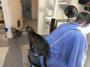 Chair Massage in the cat room @ Neko Ngeru Cat Adoption Cafe | Lower Hutt | Wellington | ニュージーランド