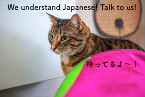Japanese Night @ Neko Ngeru Cat Adoption Cafe | Lower Hutt | Wellington | New Zealand