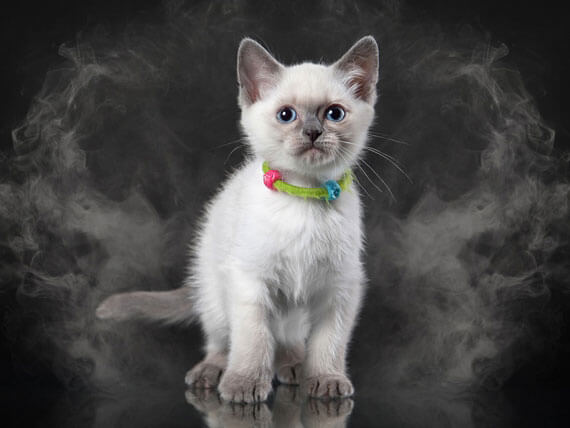 The Harmful Effect of Smoking Around Pets