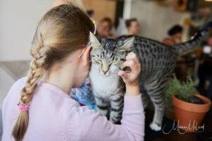 Cat Care and Communication for Kids @ Neko Ngeru Cat Adoption Cafe   Lower Hutt   Wellington   New Zealand