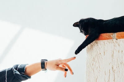 Catifying Your Home For Harmony And Your Cat's Safety